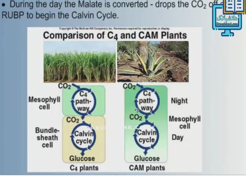 انیمیشن نحوه فتوسنتز در گیاهان کم