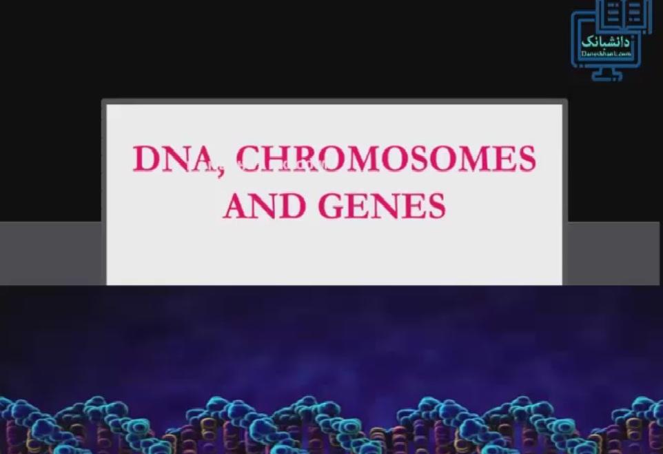 همبستگی کروموزوم ، دی ان آ و ژن در منظر عمومی