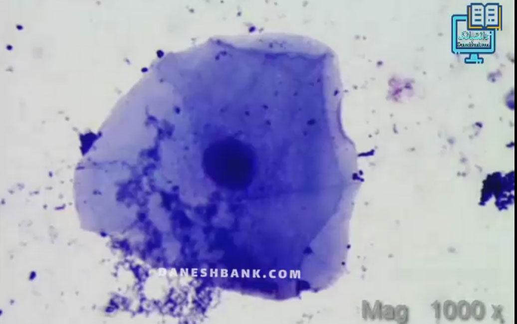 مشاهده میکروسکوپی سلول های مخاط دهان