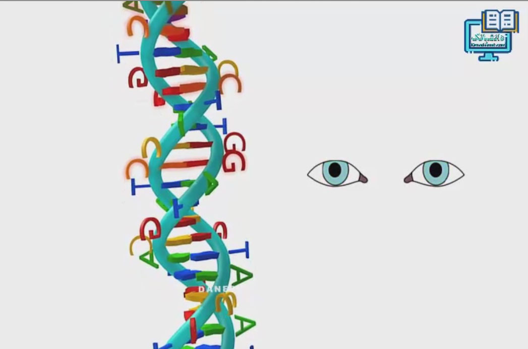 کروموزوم ، درون مایه دستورالعملها  برای حیات و تولیدمثل موجودات زنده