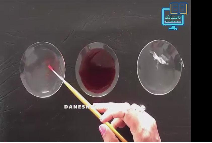 مشاهذه میکروسکوپی بشره پیاز
